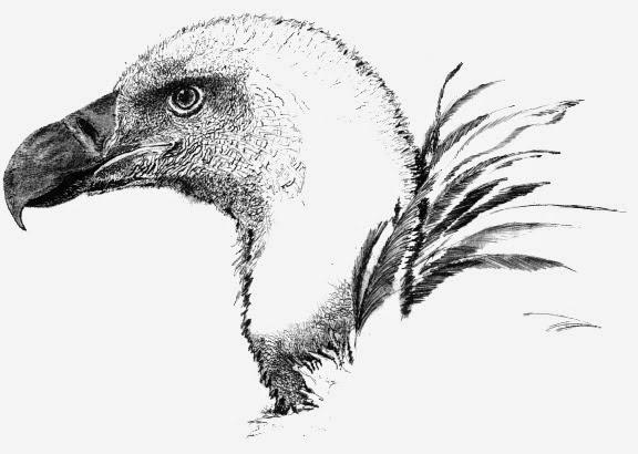 Gruppo Ornitologico Sardo: Aves Ichnusae I (I) 1998
