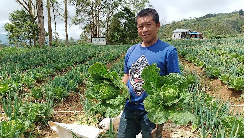 Kampung Sayur, Petani Sayur dan Pasar Sayur