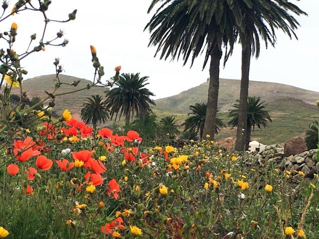 Lanzarote_Senderos_Naturaleza_Haría_ObeBlog_05