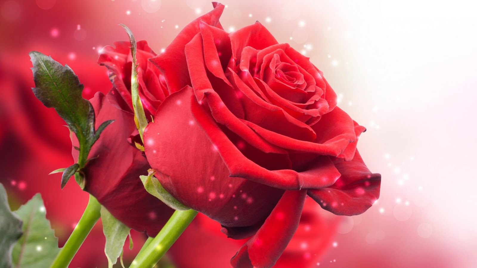 Latest hd wallpapers for you free download many beautiful flowers in the world but my flower is you your most beautiful than others i love my lovely rose happy rose day dear izmirmasajfo
