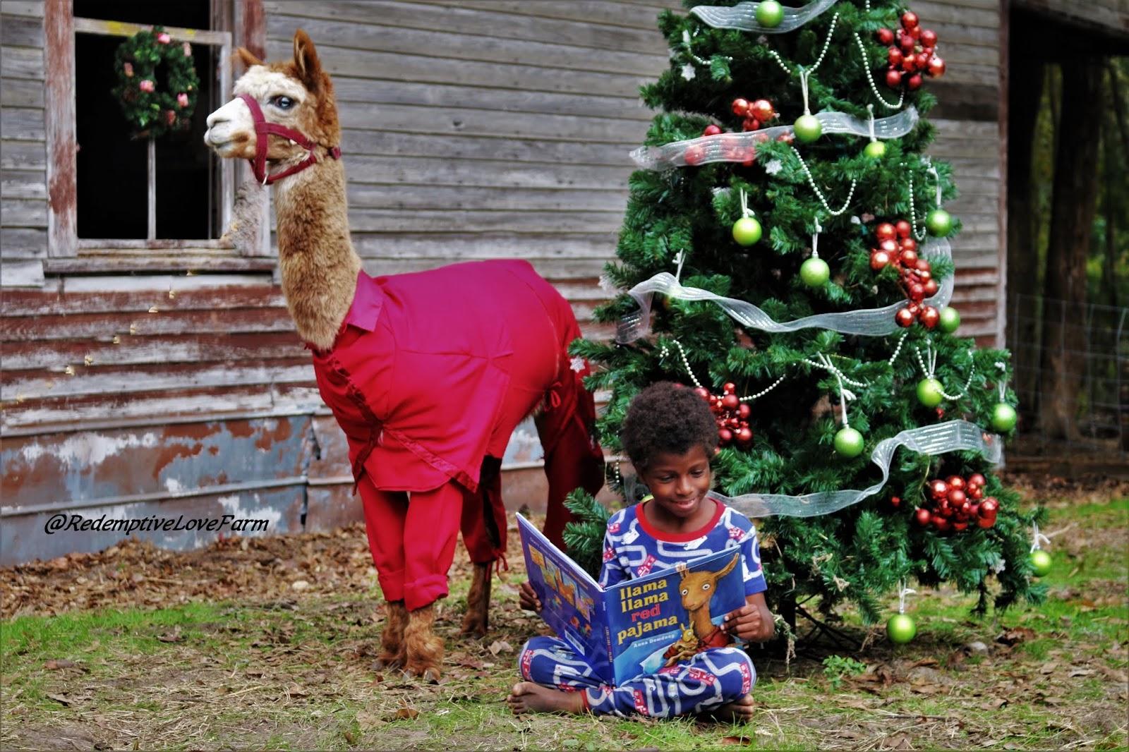 Redemptive Love Farm: Llama Costumes!!!