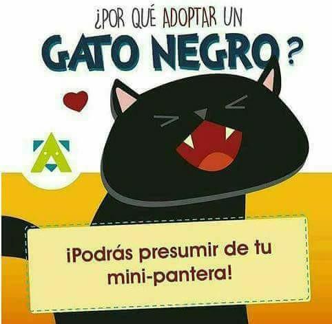 mini pantera gato negro