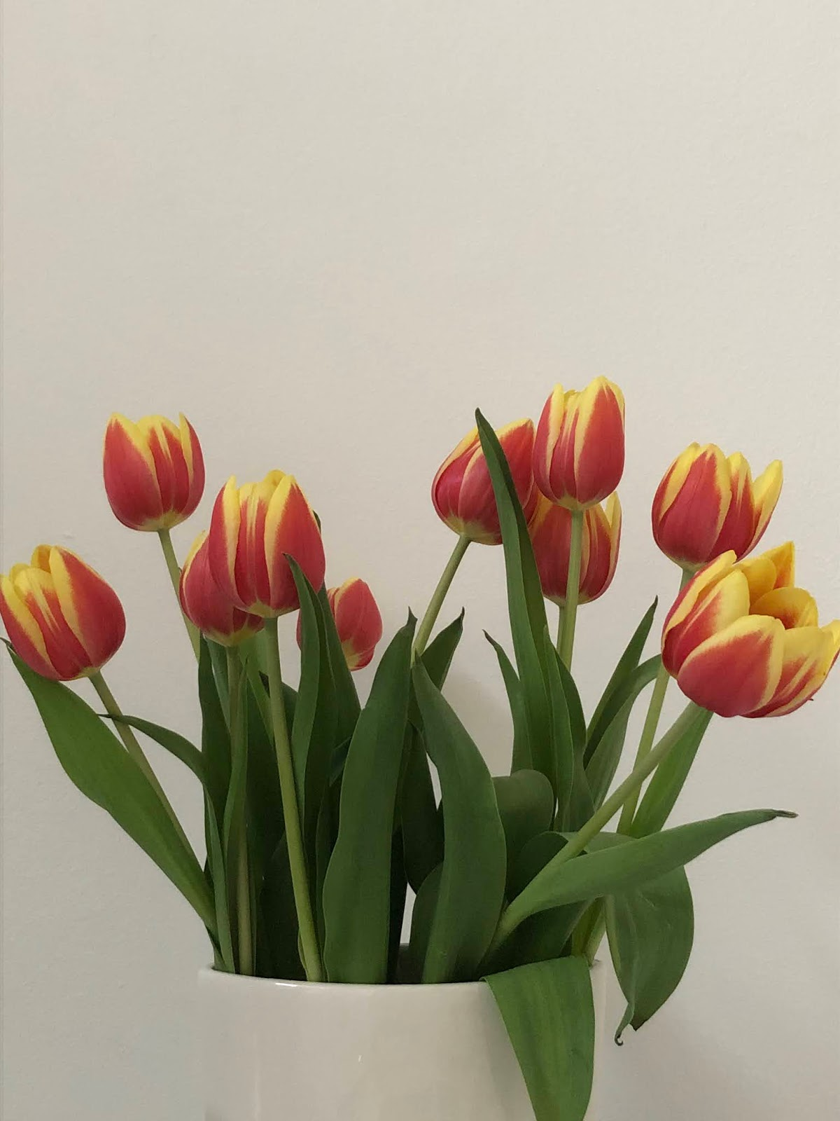 tulips, lockdown, girl from north london, round up