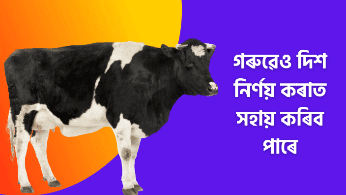 Assamese Cow Fact | Awesome Fact In Assamese