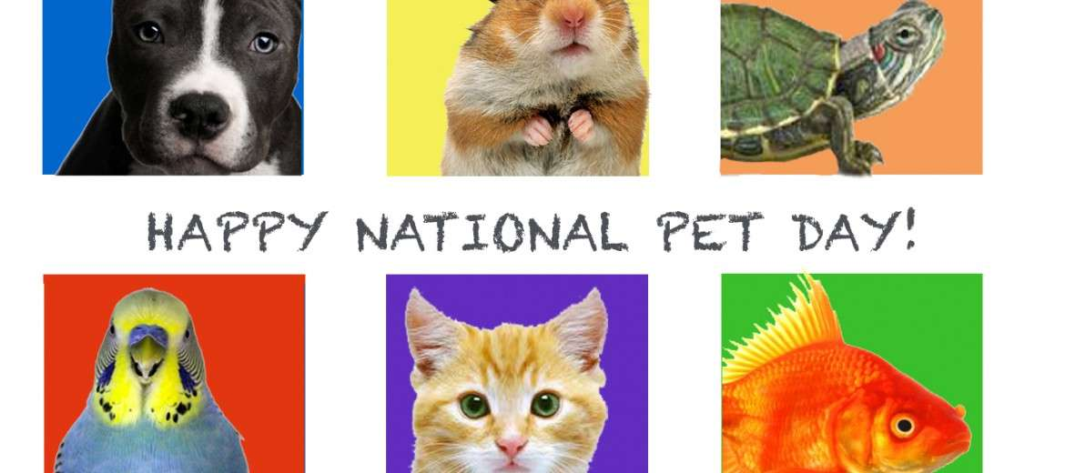 National Pet Day Wishes