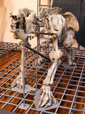 Mounted Megatherium americanum. The first prehistoric animal skeleton mounted, in 1795.Photo by Xauxa Håkan Svensson.