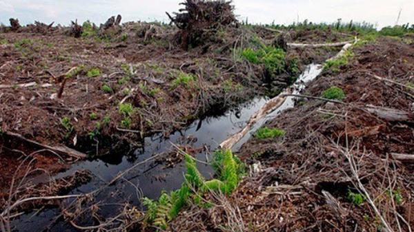 jenis tanah dan pemanfaatannya, jenis tanah dan persebarannya, jenis tanah latosol, jenis tanah pdf, jenis tanah subur, jenis tanah dan ciri-cirinya