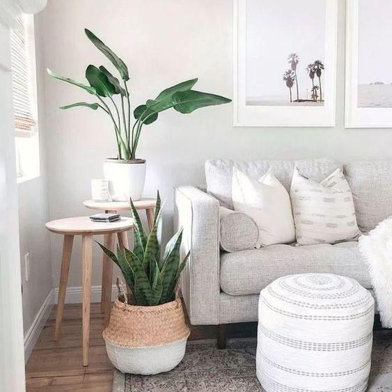 Dekorasi Ruang Tamu Minimalis dengan Tanaman Hias Pojok Ruangan