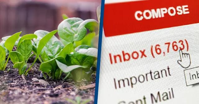 Ilmuwan Telah Mengajari Tanaman Bayam Untuk Mengirim Email