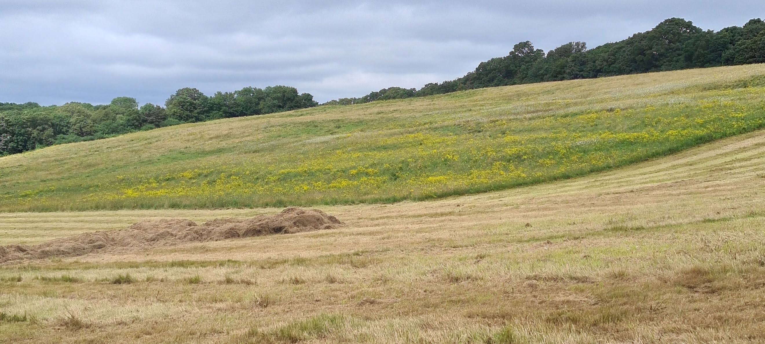 Yates Meadow in Epping Forest partially mown in August