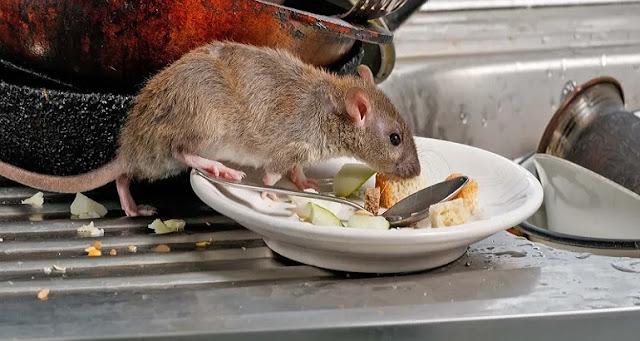 Panico dell'altro virus; Hantavirus, gli esperti dicono cosa non consumare