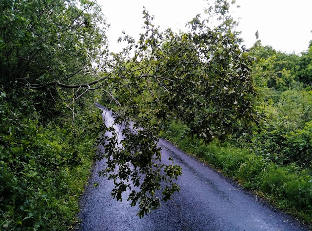 a branch swinging across the road