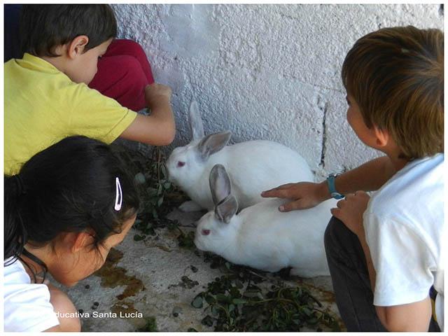 En el corral de los conejos- Chacra Educativa Sta. Lucía