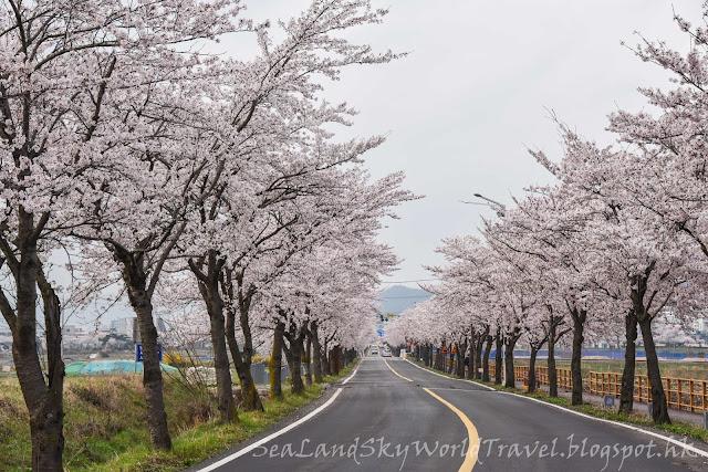 南韓慶州櫻花芬皇寺, 皇龍寺