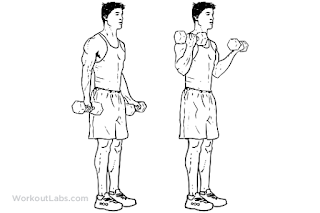 4. Dumbbell Bicep Curl