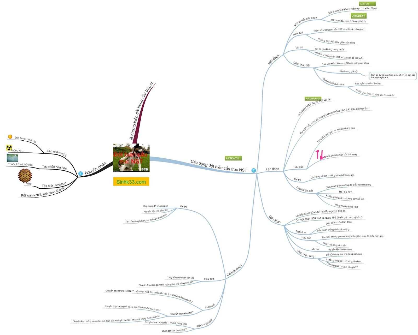 Sơ đồ tư duy đột biến cấu trúc NST