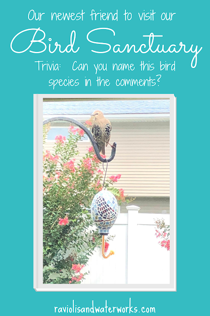bird sanctuary in your yard; attract birds to your yard; bring different species to yard