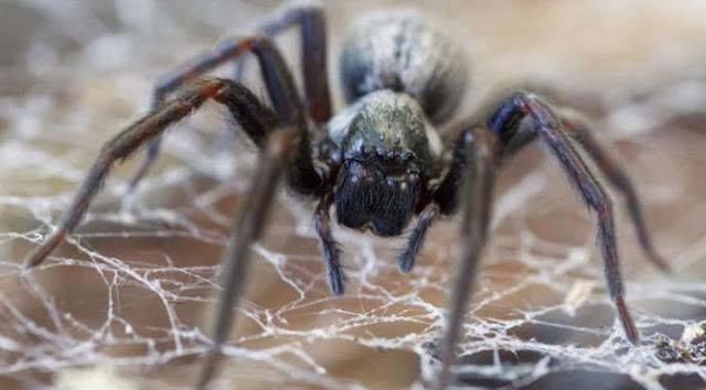 Rüyada Örümcek Görmenin Anlamı ve Yorumu, Rüyada beyaz örümcek, Rüyada Örümcek Isırması, Rüyada örümcek yakalamak, Rüyada örümcek sokması, rüyada siyah örümcek görmek ne demek?