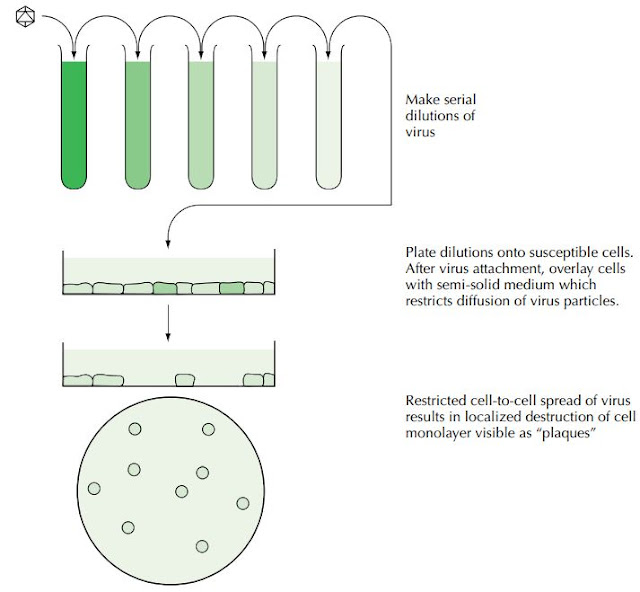 CELL CULTURE METHODS