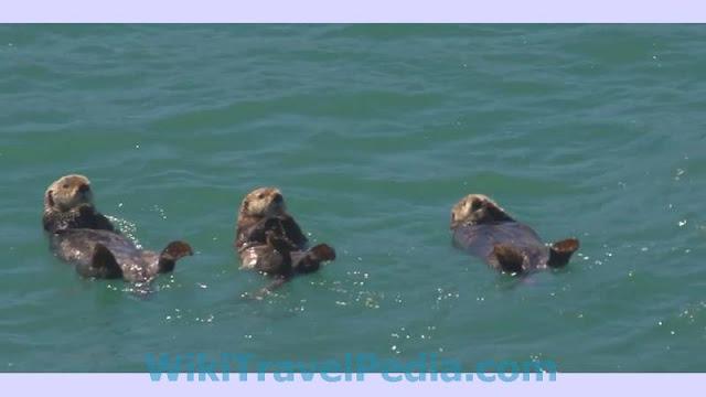 Anchorage Alaska Wildlife