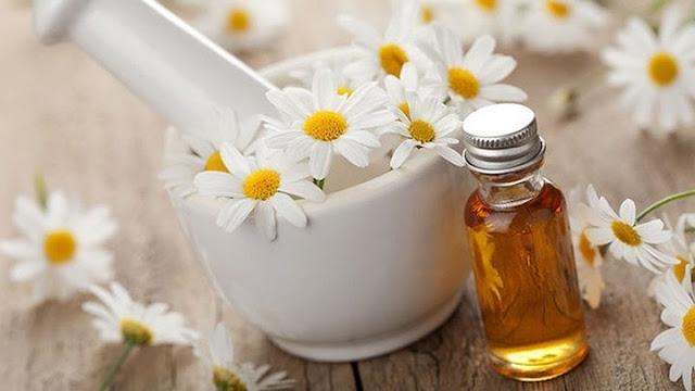 Tinh dầu hoa cúc xua đuổi muỗi, côn trùng