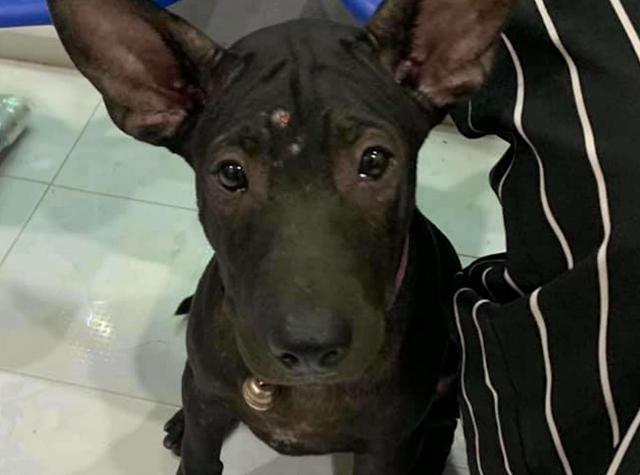 Потерявшийся щенок пришел в ветеринарную клинику, где ему делали прививки за пару месяцев до этого, чтобы попросить помощи и вернуться домой