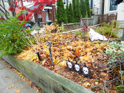 Bedford Park Fall Cleanup Front Yard Before by Paul Jung Gardening Services--a Toronto Organic Gardening Company