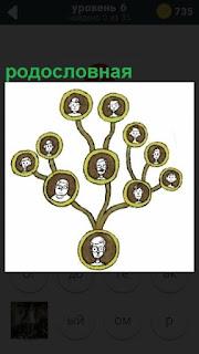Небольшое дерево с фотографиями, выполненное в качестве родословная