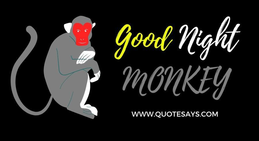Good Night Funny Monkey for Lover