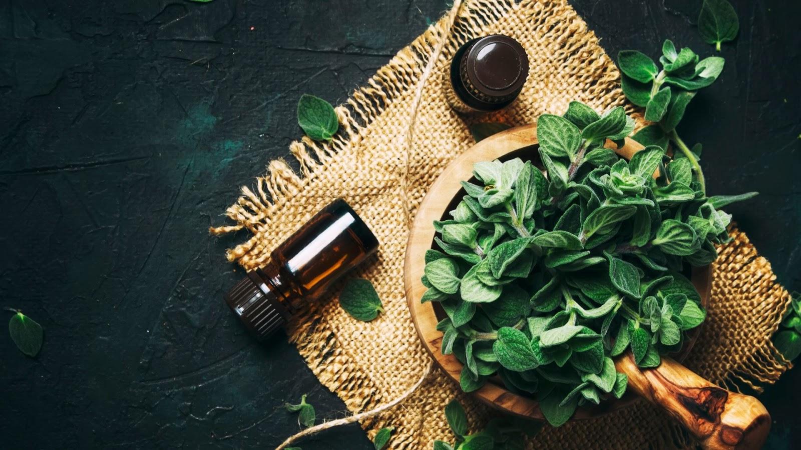 właściwości oleju z oregano