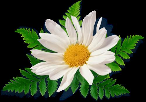 Coleccion De Gifs Imagenes De Flores Blancas