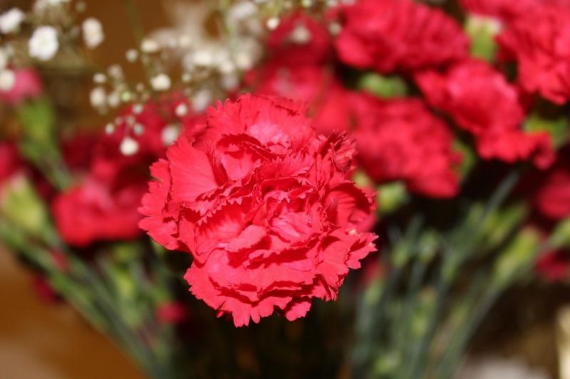 من أجمل النبتات الداخلية التي ستستمتع برؤية جمالها وعبير عطرها