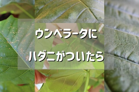 黒い 小さい 植物 虫 観葉