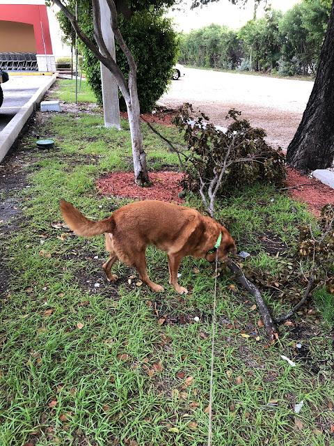 Florida Keys Dog Walking
