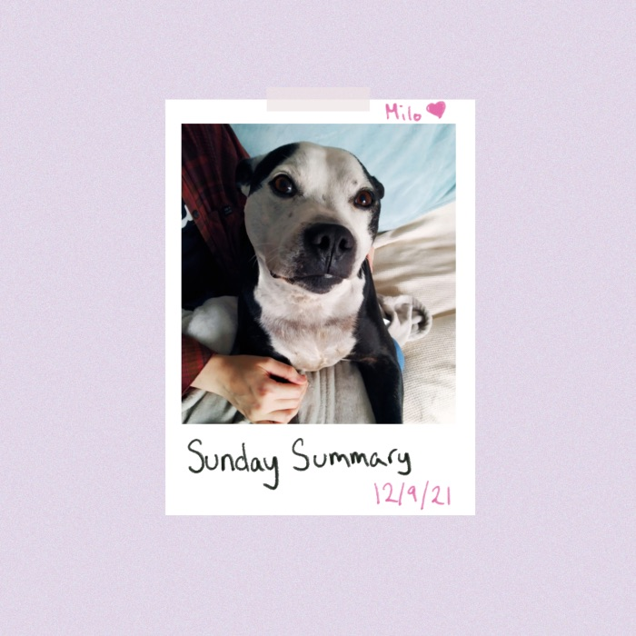 Header image with a Polaroid photo of a black and white dog staring at the camera. Hand written note saying Milo and then below the Polaroid it says Sunday Summary 12/09/21