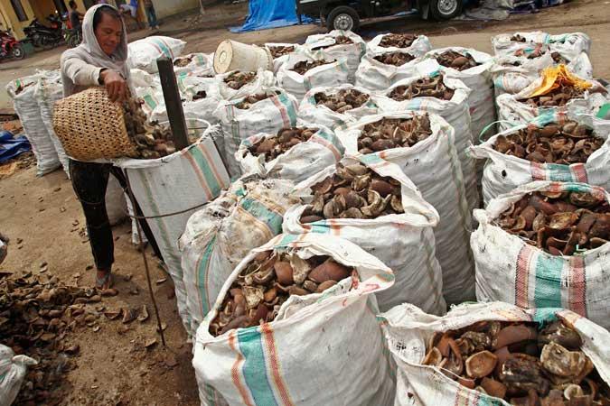 "Ambon, Malukupost.com - Harga kopra yang ditawarkan para pembeli kepada para petani di Kota Ambon bergerak turun cukup jauh yakni Rp6.800/kg dari sebelumnya Rp7.500.    ""Harga lagi turun sekarang di Surabaya, jadi di Ambon juga kami turunkan harga beli dari petani, agar kami tidak merugi sebab hasil pembelian kopra di Kota Ambon maupun Maluku pada umumnya selama ini dijual lagi ke Surabaya sebagai pasar utama,"" kata Ricky, pembeli yang menempati toko miliknya di kawasan pertokoan Pasar Mardika, Selasa (27/2)."