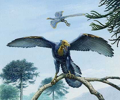 Archaeopteryx - missing link between birds and dinosaurs comes to National Museum Cardiff