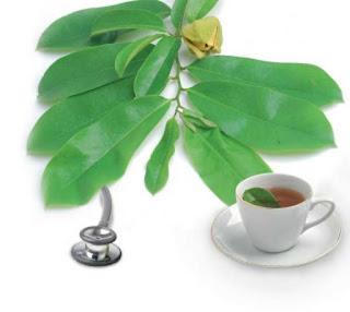 Manfaat dan khasiat daun sirsak untuk kesehatan