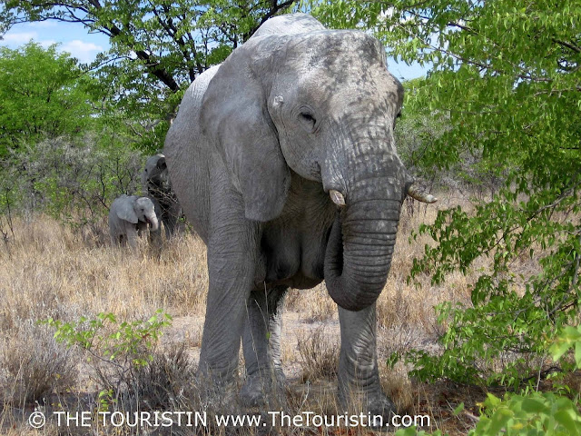 namibia -group of elephants Etosha - the touristin Dorothee Lefering