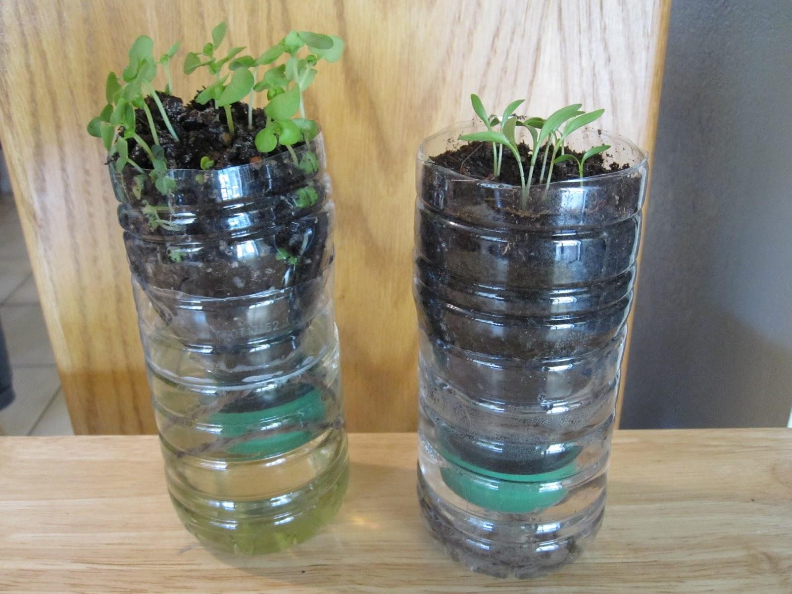 Kimmie S Craft Corner Water Bottle Garden
