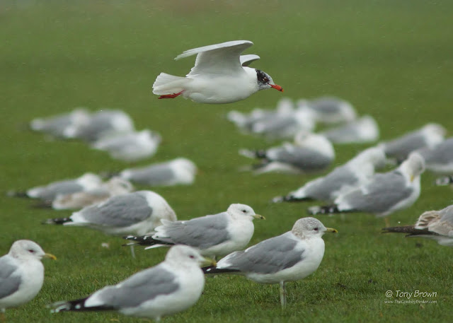 Med Gull, London, Wanstead