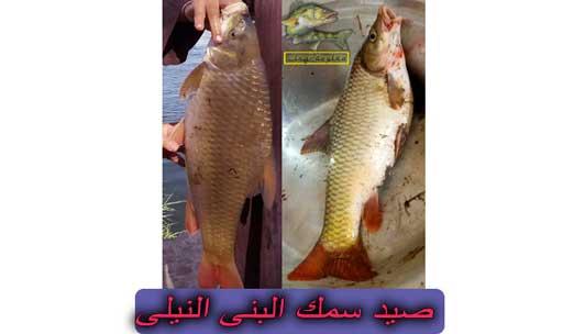 طريقة صيد سمك البني ومعلومات عنها   سمكة البني النيلي