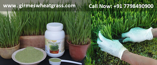 Wheatgrass Business Opportunity