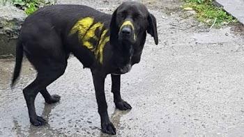 a31ef859d75 Με ανακοίνωσή της η ΑΕΚ καταδικάζει το βάψιμο του σκύλου (photo)