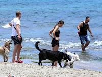 Perros De La Playa, Dogs on the Beach