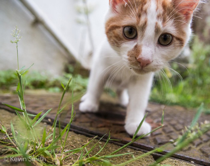 ginger-and-white cat in a garden