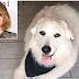 Διάσημη ηθοποιός υιοθέτησε σκύλο που εκπαιδεύθηκε σε φυλακή