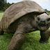 10 Hewan Tertua yang Masih Hidup Sampai Sekarang