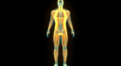What is Human Body?