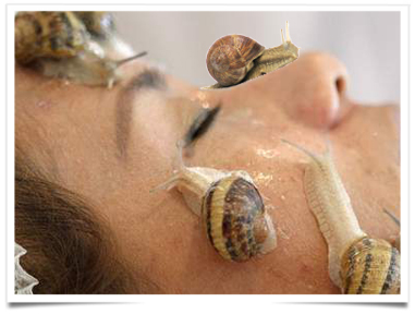 Un Escargot De Beaute